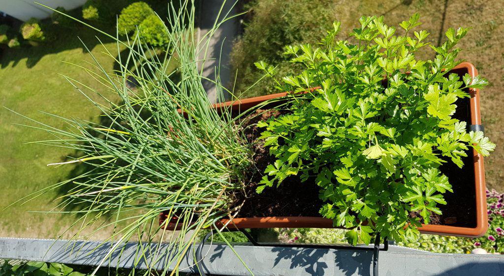Turbo Urban Gardening am eigenen Balkon - Diaetologie Eberharter GF04