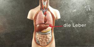 Titelbild_Weg-mit-dem-Fett-Ernährungstherapie-bei-Fettleber_Diaetologie-Eberharter